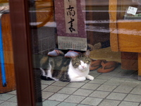 Shimura_wagashi